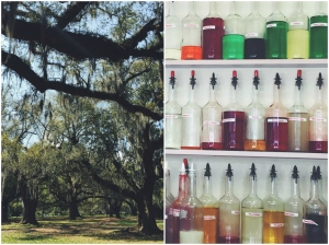 Left: Spanish moss hanging off ancient trees. Right: Pandora's assortment of brightly colored liquids reminded me of a magician's cabinet.